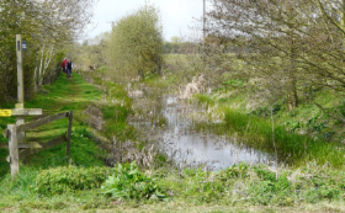 Derelict section of Wilts and Berks Canal